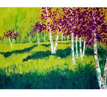 The Birch Grove Photographic Print