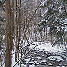 Mill Creek Meandering by Monnie Ryan