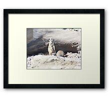 Baby Meerkats  Framed Print