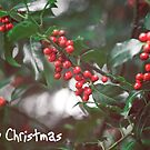 Christmas Berries I by Adam Lack