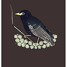 Starling by Ennemme
