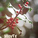 Christmas Berries II by Adam Lack