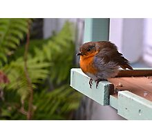 Baby Robin on Bird Table Photographic Print