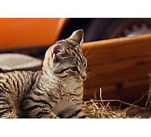 Farm Cat Photographic Print