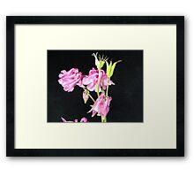 Aquilegia-3668 Framed Print