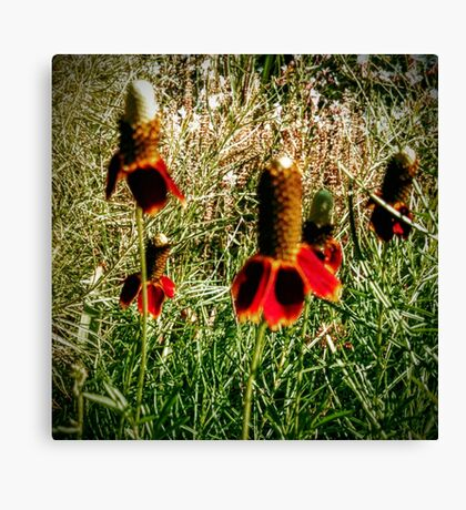 Mexican Hats Canvas Print