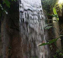 Discovery World Tropical Rainforest Waterfall by Sheryl Marshall