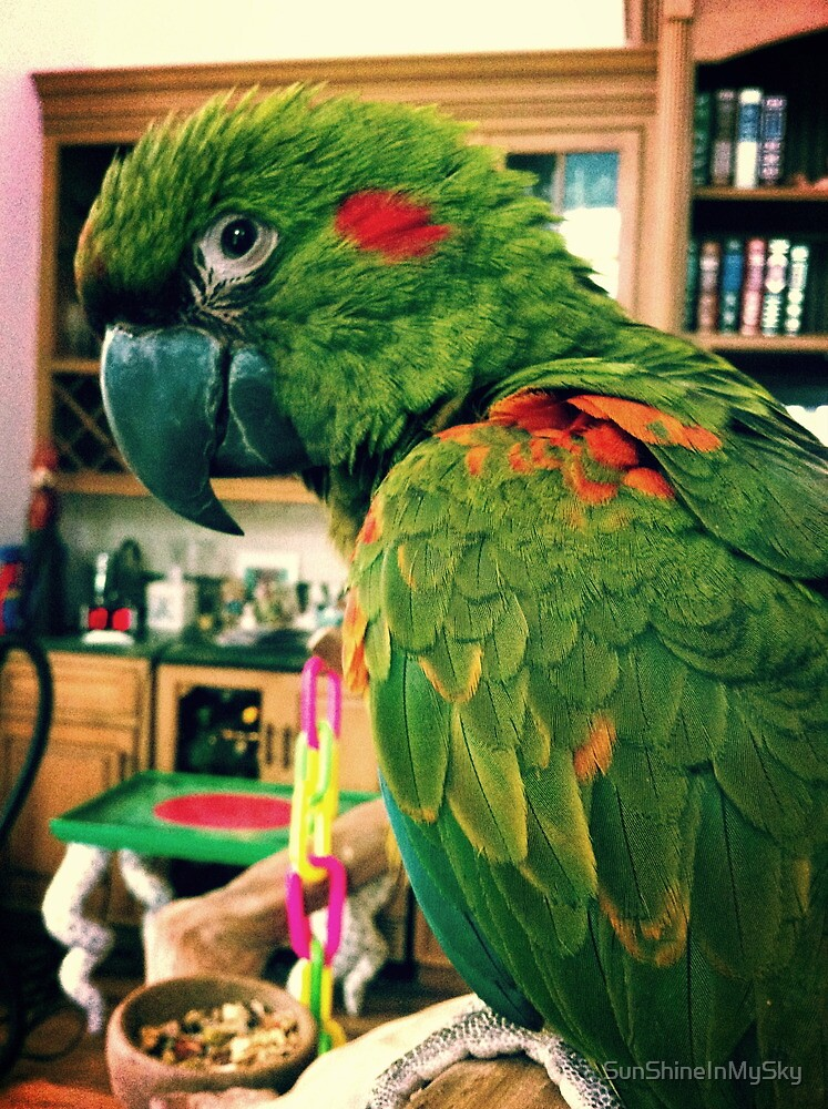 McGee The Macaw  by SunShineInMySky