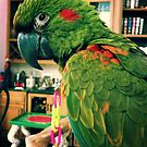McGee The Macaw  by SunShineInMySky