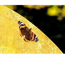 Butterfly Sitting On A Grave Photographic Print