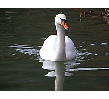 Swan Deep Green Photographic Print