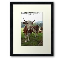 Cow Proudly Framed Print