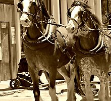 Off to Sovereign Hill by Karen Tregoning