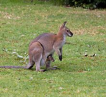 Wallaby with joey by TonySlattery