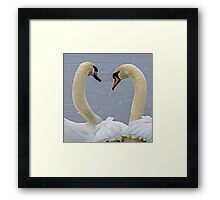 Swans in the snow Framed Print