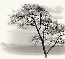 My Favourite Tree on a Grey day at Lyme Dorset UK by lynn carter