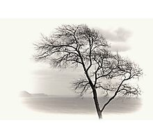 My Favourite Tree on a Grey day at Lyme Dorset UK Photographic Print