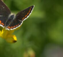 Flora - Brown Argus Sticker