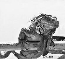 Black&White Iguana by Jeff Ore