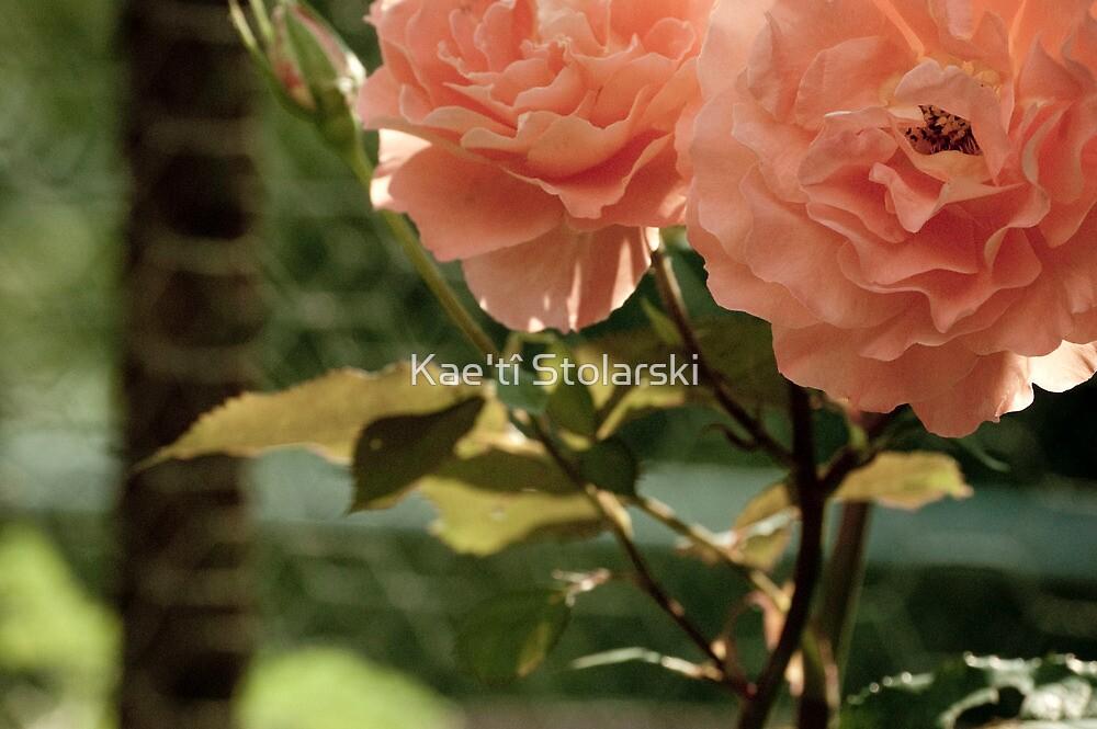 Antique Coral Rose by Kae'tî Stolarski