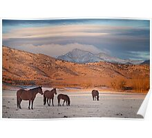 Rocky Mountain Country Morning Poster