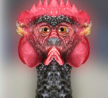 The Chickenator by TIMOTHY  POLICH