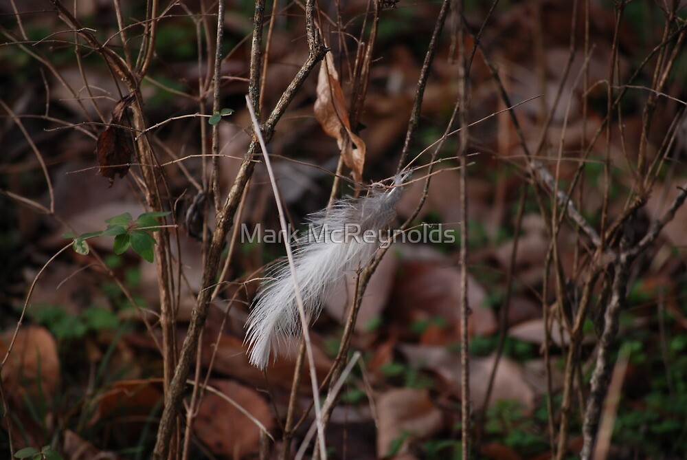 Lonely Feather by Mark McReynolds