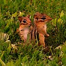 Two Baby Chipmunks by SmilinEyes