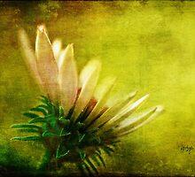 Awakening by Lois  Bryan