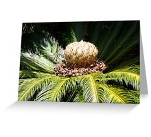 """Day 16 