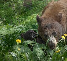 Mama Bear and Baby by Patrick Kavanagh