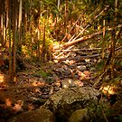Mount Tambourine Rain forest, QLD, Australia by Paul Welding