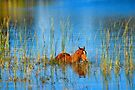 Waterhorse by Karen Peron