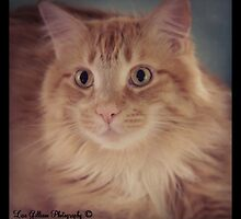 Frankie by Lisa Gilliam Photography