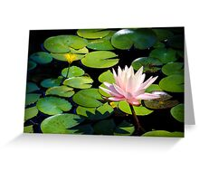 Pink Water Lily Flower above a  Pond Greeting Card