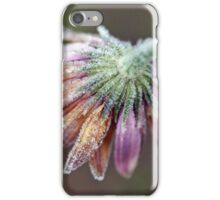 Daisy Frost iPhone Case/Skin