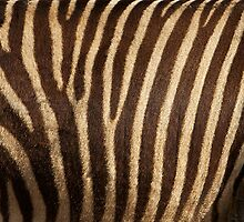 Zebra Fur by bobkeenan