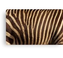 Zebra Fur Canvas Print