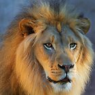 Golden Lion looking right by bobkeenan