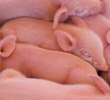 Pile of Piglets by bobkeenan
