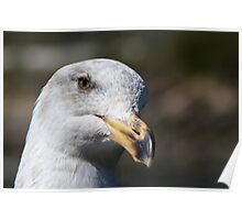 Pensive Seagull face Poster