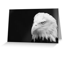 Leering Bald Eagle Greeting Card