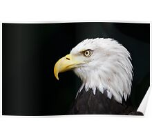 Eagle head threatened Poster