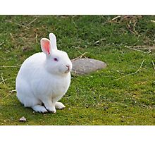 White Bunny Photographic Print