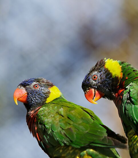 Lorikeet Pair by bobkeenan
