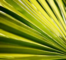 Palm frond by bobkeenan