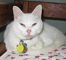 Blue Eyed White Cat by silverdragon