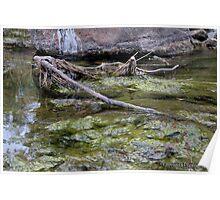 Merri Creek Poster