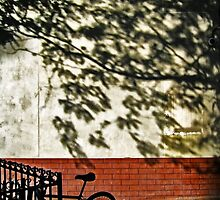 Bicycle By Shadows by Mark Ross