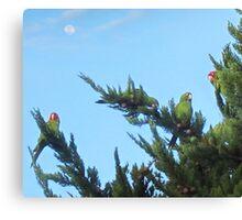 Parrots of Telegraph Hill 2 Canvas Print